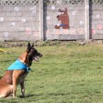 dresaj canin cluj - dogmaster