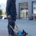 demonstratii dresaj canin - dogmaster