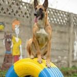 Doris - caini Dogmaster
