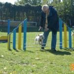 westie cluj - dogmaster - royal canin