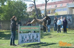 Demonstratii dresaj canin