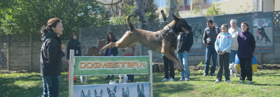 Scoala Dresaj Canin DogMaster
