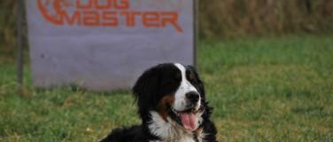 Serviciile DogMaster