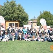 Intalnire Westie Cluj – Sponsori Dogmaster & Royal Canin