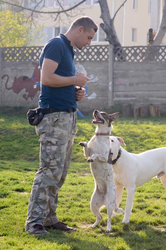 https://www.dogmaster.ro/wp-content/uploads/2013/03/dresaj-canin-cluj-dogmaster-65.jpg