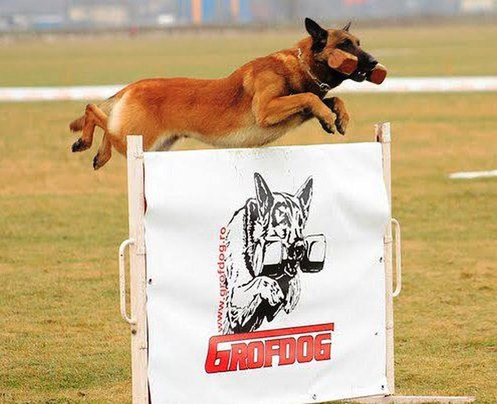 https://www.dogmaster.ro/wp-content/uploads/2014/01/competitii-canine-dogmaster-03.jpg
