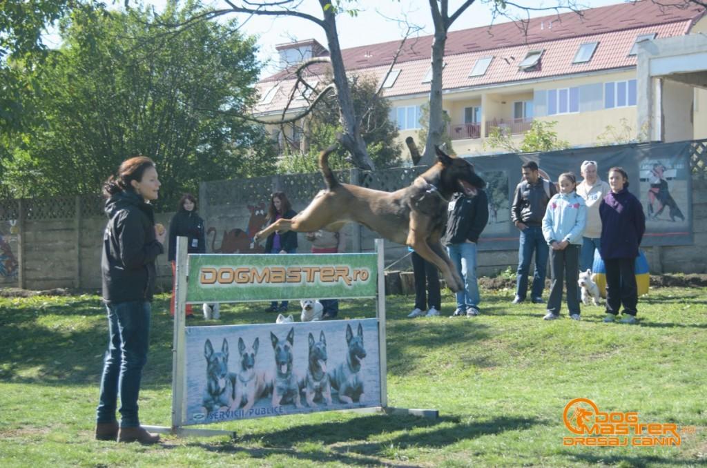 https://www.dogmaster.ro/wp-content/uploads/2014/01/demonstratii-dresaj-canin-dogmaster-12-1024x678.jpg