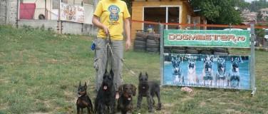 Despre DogMaster